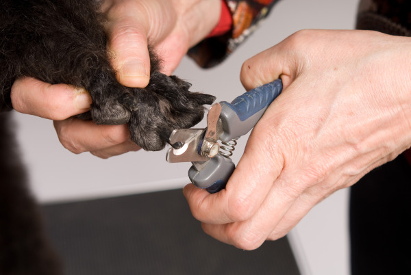 Home actie nagels knippen hond - 600